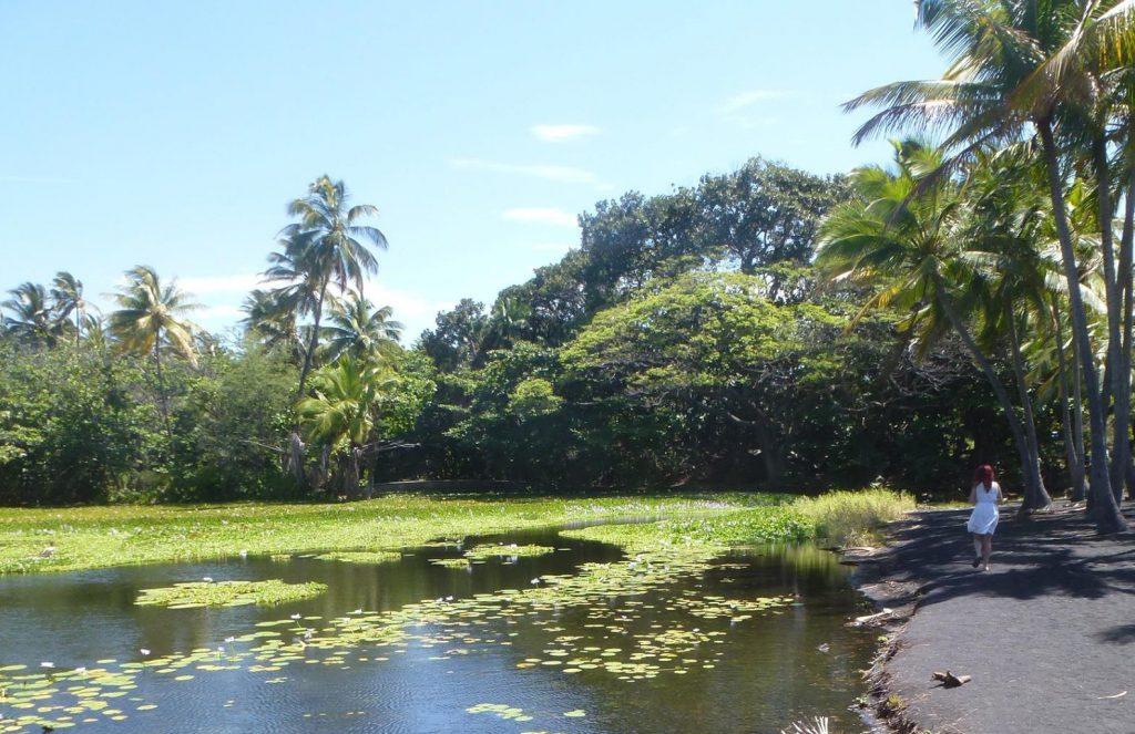 7 domande che ti sei sempre fatto sul cosa sapere prima di andare alle Hawaii consigli suggerimenti viaggiare meteo clima stagione Google America volo voli prenotazione noleggio auto